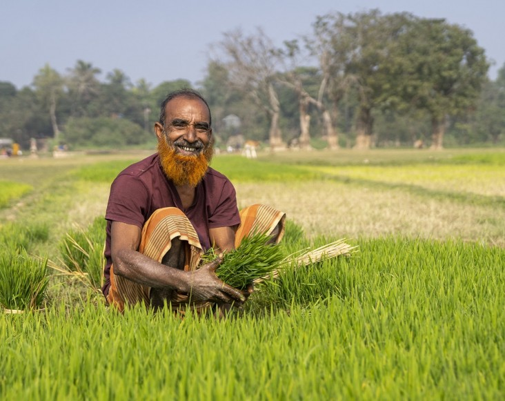 A farmer works his paddy field in Govindho Sree village in northeast Bangladesh.