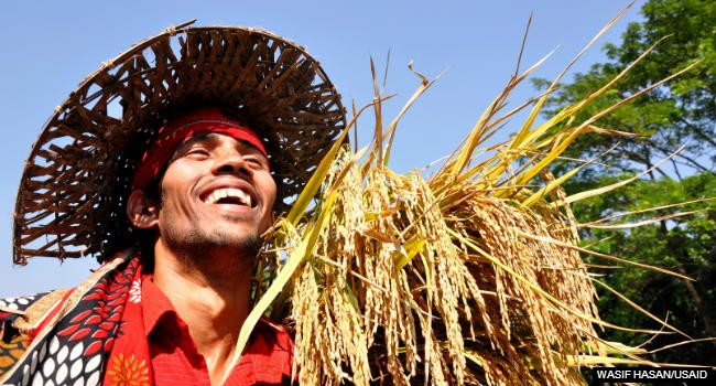 Image of a rice farmer in Bangladesh