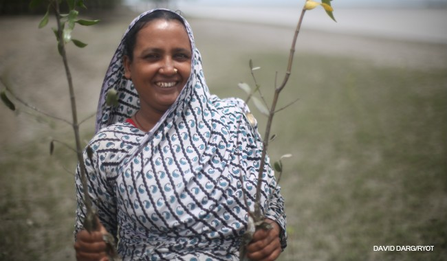 Image of a woman in Bangladesh planting mangrove saplings