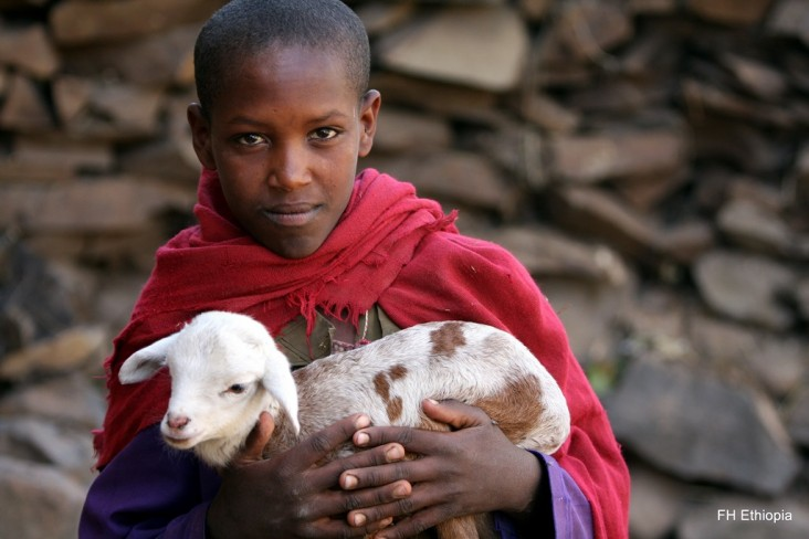 An Ethiopian boy holds a baby goat.