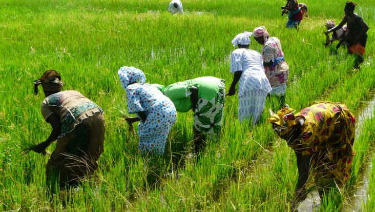 Senegalese women work together to get the fruits of the land as part of USAID/Senegal's Wula Nafaa program.