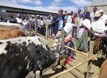 USAID's Gary Robbins delivers a heifer to one of the first five selected household dairy farmers in the Chacha District.
