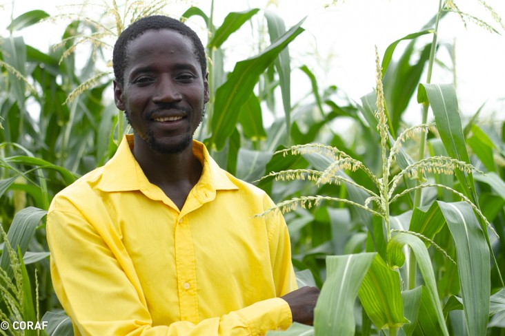 A Senegalese farmer with his crop of climate-resistant wheat.