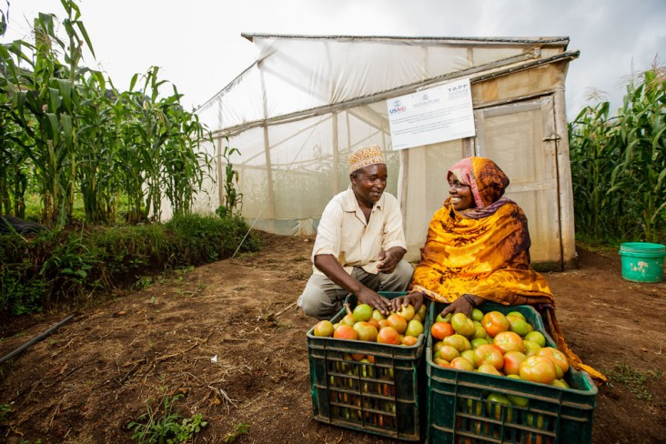 Through the introduction of low-cost greenhouses and high-quality seeds, tomato farmers receiving support from USAID's Tanzania