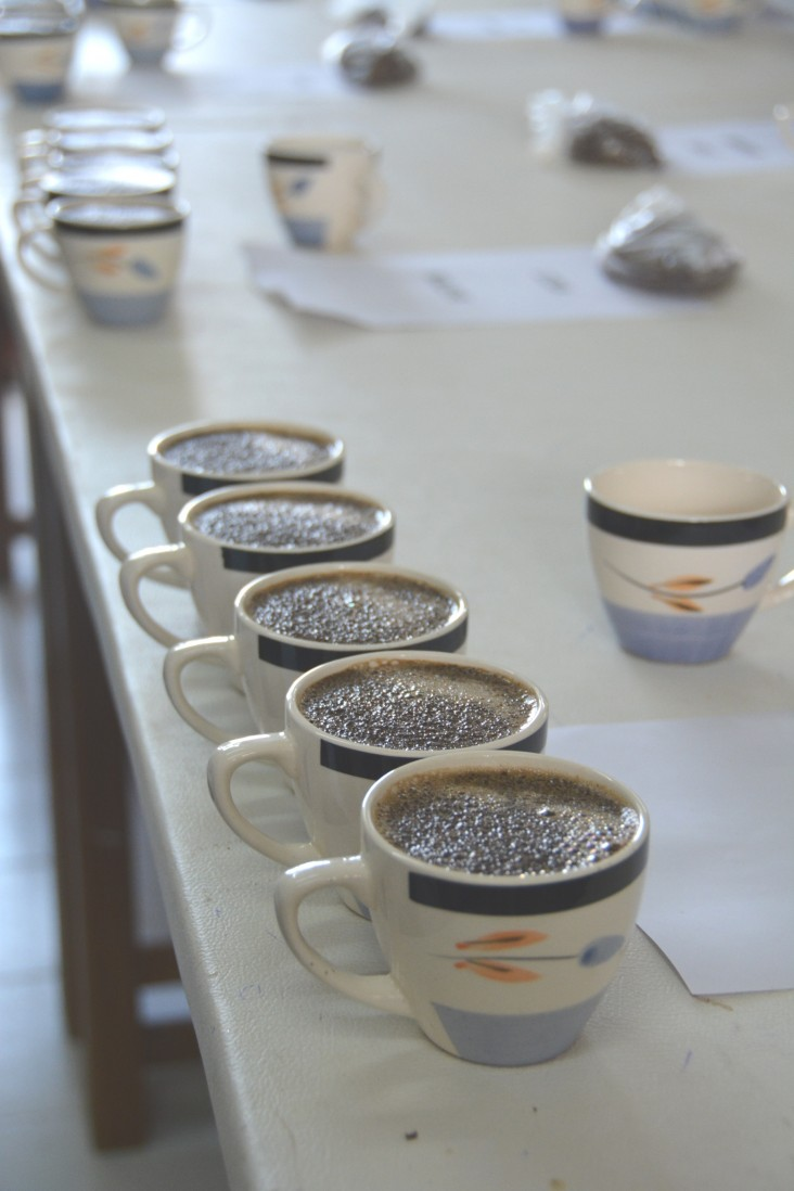 Coffee ready to be cupped to determine its taste profile and quality score