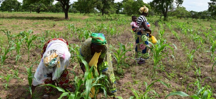 USAID works with smallholder farmers in Ghana to increase their yields and adapt to a changing climate.
