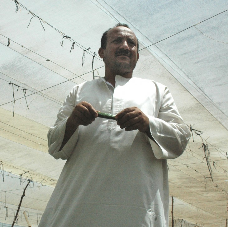 Ibraim Amer in his cucumber greenhouse
