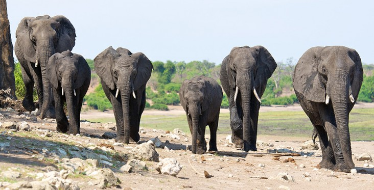 Elephants in the KAZA Transfrontier Conservation Area