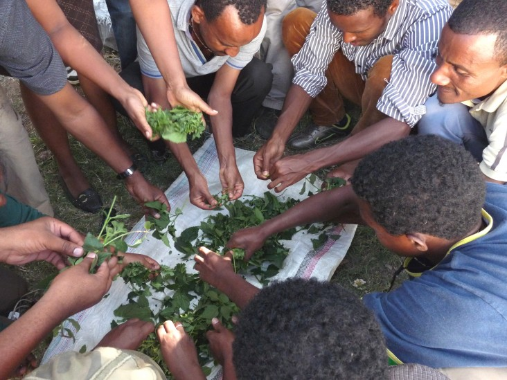 PermaGardening training helps families to produce vegetables in a small garden in a sustainable manner.
