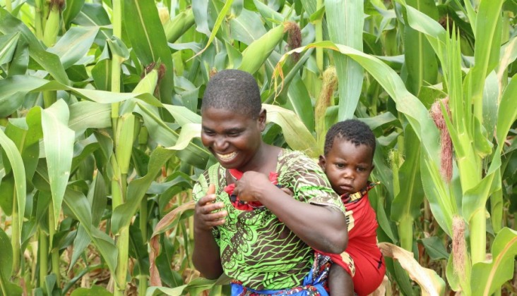 Through USAID's Africa RISING program, farmers in Malawi, like Mercy Joseph (pictured), learn agroforestry practices to improve food security while increasing soil fertility, tree canopy, and wildlife habitat.