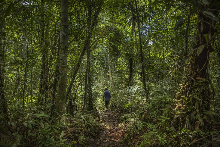 Estimates suggest that about a third of the world's people have a close dependence on forests and forest products, making their conservation, management, and restoration more important than ever.