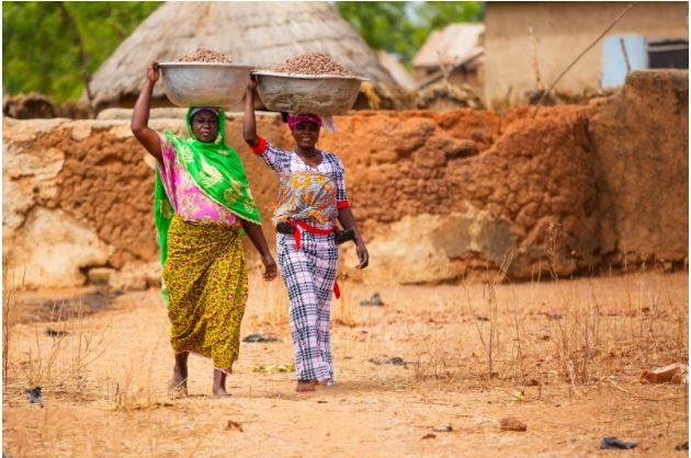 Women carry their shea kernels to market.