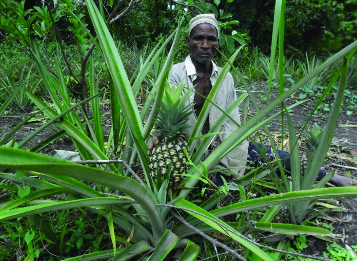 A man stands near a pineapple plant