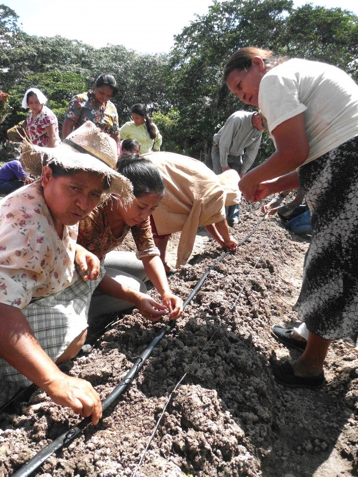 Herminia Gutierrez, left, and other women install a drip irrigation line to water their coffee bushes and vegetables.
