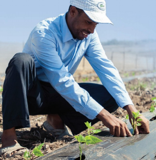 Abidi Mohamed is one of 200 smallholder farmers working with Green Farm through USAID's Morocco Economic Competitiveness project