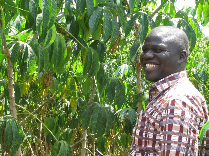 Field evaluation of virus-resistant cassava plants in Uganda