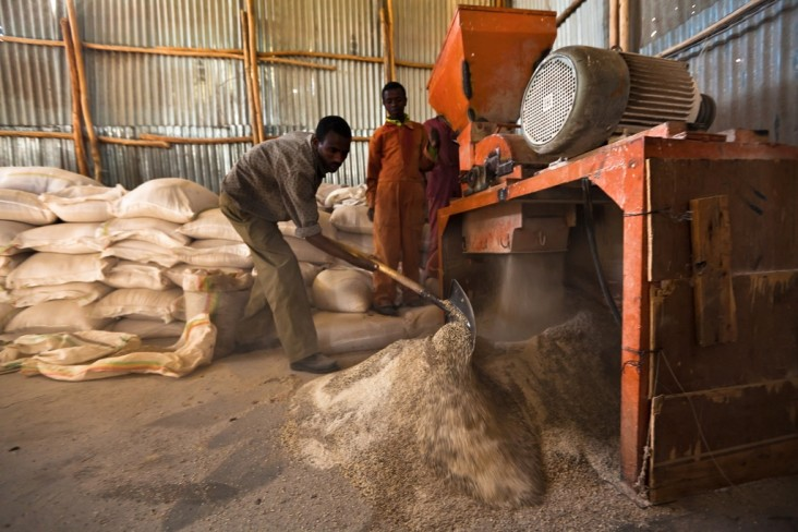 Increasing Food Security through Feed the Future – Grain processors in Ethiopia