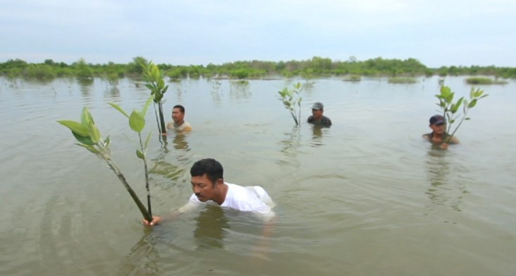 Rusli and his fellow fishermen plant mangrove saplings in North Sumatra.
