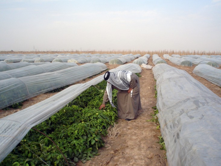 Iraq agribusiness