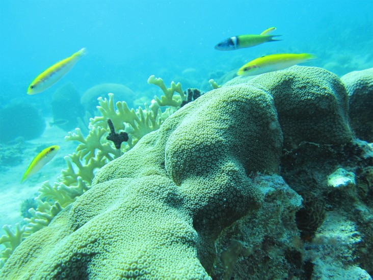 A view of the Bluefields Bay coral reef