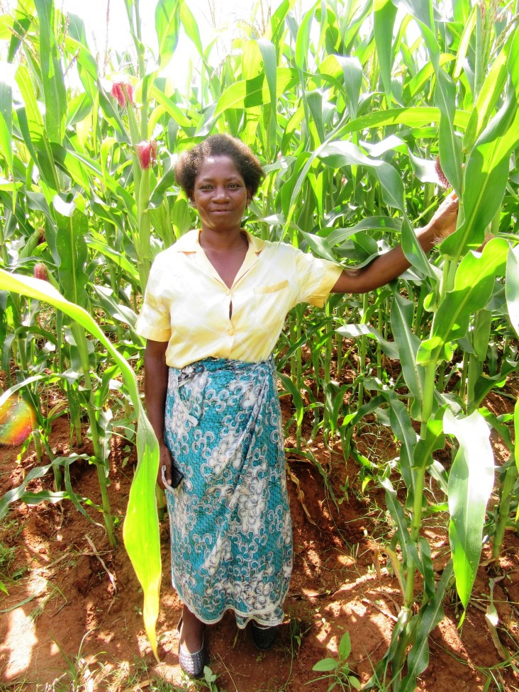 Edna Ndalama stands with her healthy and high-yielding drought tolerant maize.