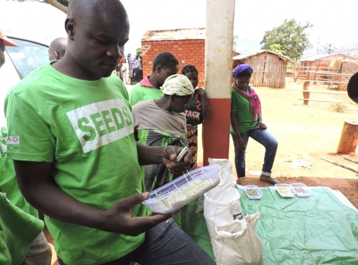 A Phoenix agro-dealer examines germination rates and growth of improved seed to determine which seeds to bring back to his store