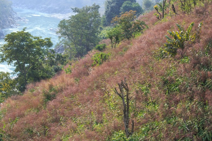 This once barren Nepalese hillside is now covered in broom grass.
