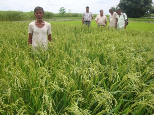 Image of Nepali farmer standing in his field, a small group of male agricultural technicians in the distance behind him.