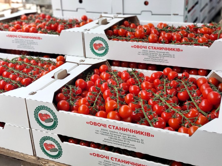 Tomatoes grown by the Ovochi Stanychnykiv Vegetable Cooperative in eastern Ukraine for sale in supermarket.