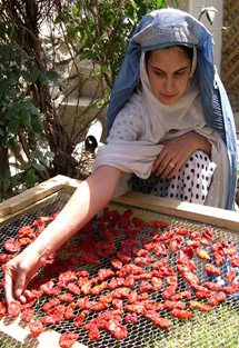 A woman places peppers out to dry. USAID established the first Women's Farm Service Center, a boost for women's participation in