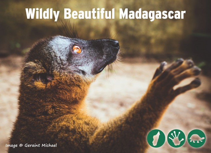 A postcard showing a lemur with the words Wildly Beautiful Madagascar.