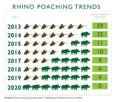 Graphic showing rhino poaching trends from 2013 to 2020. The number of rhinos poached in 2013 was 59 and steadily dropped all the way to zero in 2020.