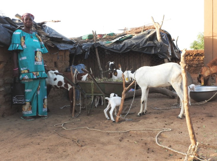 Haro Tissa shows off the goats she raised through habbanayé, a local practice of loaning a breeding animal to a neighbor in need.