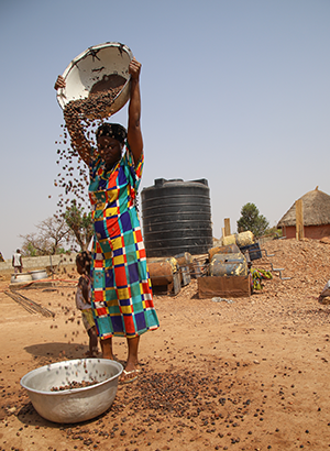 Photo of woman processing shea nuts