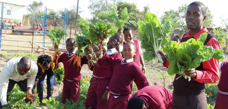 Teachers and students at Ezweni Primary School in Bushbuckridge, Mpumalanga, harvest Reel Gardening vegetables.