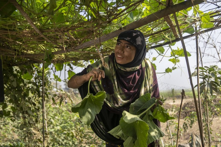 Tahmina Begum collects gourd leaves in her vegetable garden.