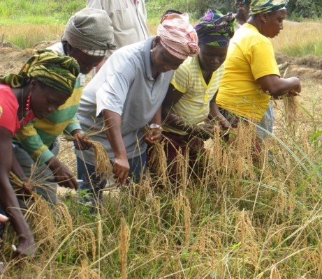 USAID agriculture programs help farmers in Liberia access technologies that improve their yields and incomes