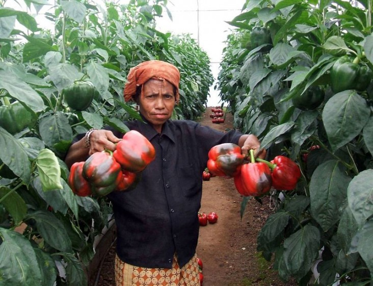 USAID Timor-Leste's DAC Project supports improved nutrition and agricultural development