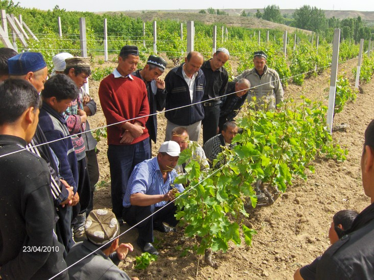 Farmers participate in grape grafting training