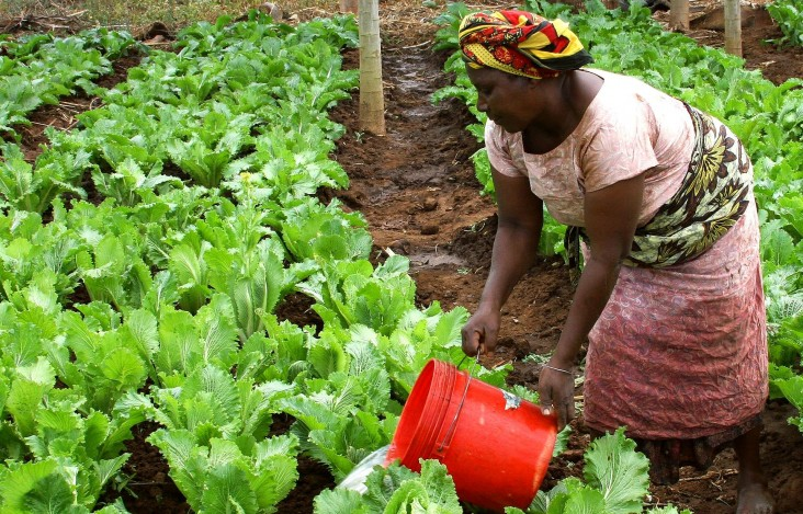 Tanzania is building food security and improving nutrition with USAID support
