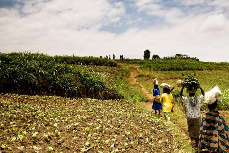 Agriculture & Food Security_Rwanda