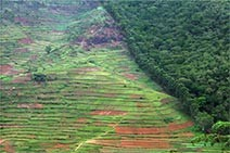 Photo of cultivated farm land right up against tropical forest