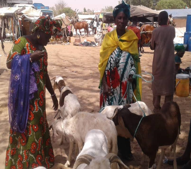 Beneficiaries of Suxali Jigeen's family livestock farm program with their sheep.