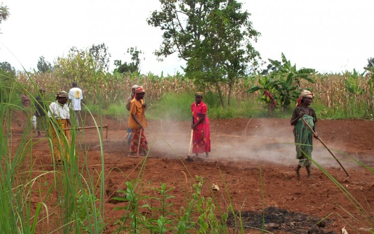 A USAID/OFDA-supported community farming association preparing land to plant beans in southern Burundi's Makamba Province