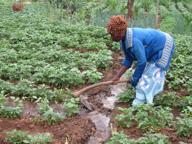 helps A farmer in Malawi diverts water from a main irrigation channel to a row of crops.