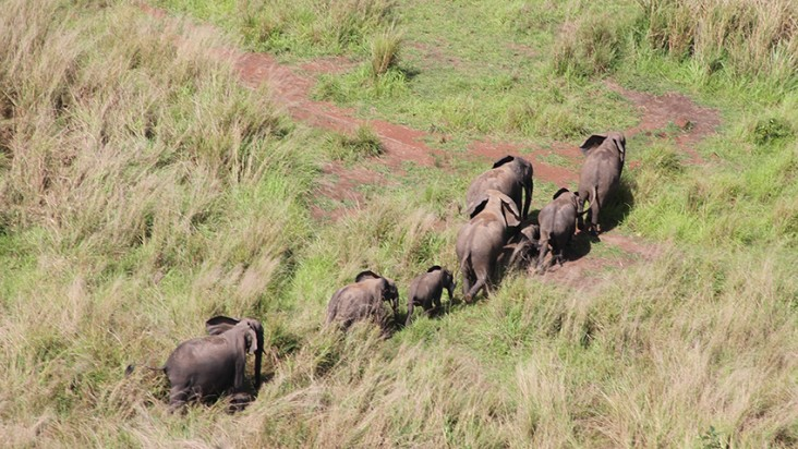 The Early Warning Network of radios now helps to track and report environmental security threats, including elephant poaching in Garamba National Park.