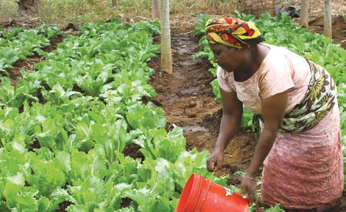 The Wanawake Kwanza (Women First) growers association in Tanzania receives Feed the Future support to boost their incomes and im