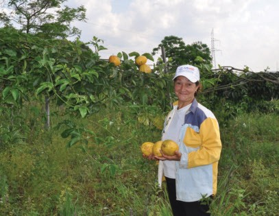 A small-scale farmer in rural Paraguay picks passion fruit that she will sell through a local farmers collective. With Paraguay'