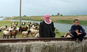 A shepherd tends his flock  of sheep in the Al Ghab Valley, a rainfed area of Syria.