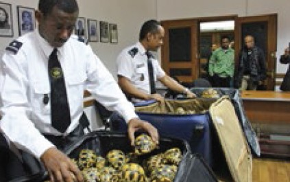 Enforcement officials in Madagascar inspect luggage